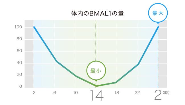 BMAL1