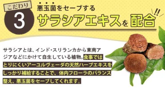 【ラクビ】デブ菌をを減らすサラシアエキス